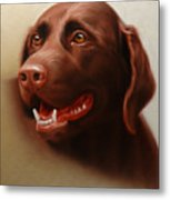 Pet Portrait Of A Chocolate Labrador Metal Print