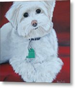 Pet Portrait Painting Commission Maltese Dog  Metal Print