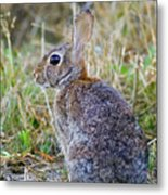 Peter Cottontail Metal Print