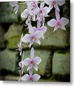Phalaenopsis Orchid 2 Metal Print