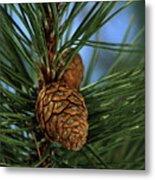 Pine Cone 2 Metal Print
