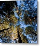 Pine Trees Near Ruidoso Nm Metal Print