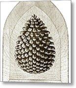 Pinecone Metal Print