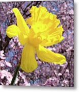 Pink Blossom Spring Trees Yellow Daffodil Flower Baslee Troutman Metal Print