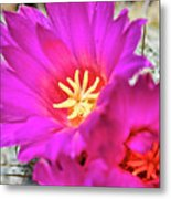 Pink Cacti Flowers Metal Print