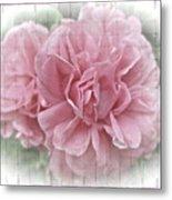 Pink Climbing Roses Metal Print