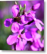 Pink Flowers With Bee . 40d4803 Metal Print