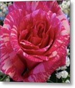 Pink Intuition Rose Metal Print