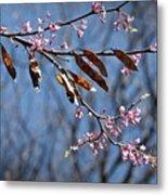 Pink Redbud Tree Blossoms- Fine Art Metal Print