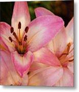 Pink Spring Lilly Metal Print