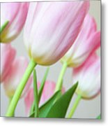 Pink Tulip Flowers Metal Print by Julia Hiebaum