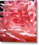Pink White Roses Floral Art Prints Rose Baslee Troutman Metal Print