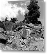 Pinnacle Pine Metal Print