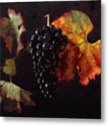 Pinot Noir Grape With Autumn Leaves Metal Print