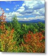 Pisgah State Park Foliage Metal Print
