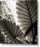 Plant 8661 Metal Print