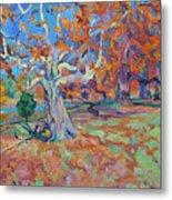 Platan Tree In Sunny Autumn Metal Print