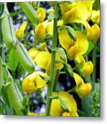 Pods And Blooms Metal Print