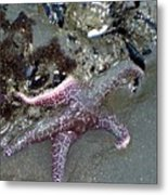 Poor Little Starfish Metal Print
