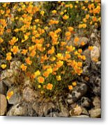Poppies On The Rocks Metal Print