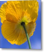 Poppy In The Sky Metal Print