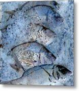 Porgies On Ice Metal Print