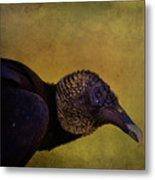 Portrait Of A Vulture Metal Print