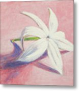 Portrait Of The Jasmine Flower Metal Print