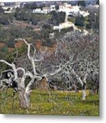Portuguese Almond Plantation Metal Print
