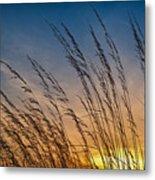 Prairie Grass Sunset Metal Print