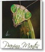 Praying Mantis Poster Metal Print