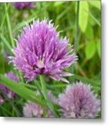 Pretty Purple Chive Flower Metal Print