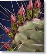 Prickly Buds Metal Print