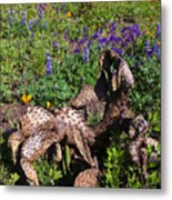 Prickly Pear Rebirth Metal Print