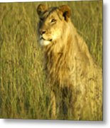 Princely Lion Metal Print