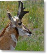 Pronghorn Buck Profile Metal Print by Karon Melillo DeVega