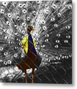 Proud As A Peacock  Metal Print