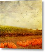 Pumpkins In The Corn Field Metal Print by Kathy Jennings