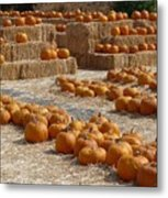 Pumpkins On Bales Metal Print