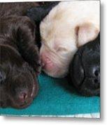 Puppies Dreams 2 Metal Print