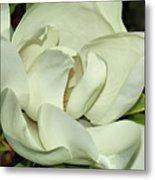 Pure White Fragrant Beauty Metal Print