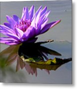 Purple Beauty On The Pond Metal Print