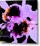 Purple Cattleya Orchid Metal Print