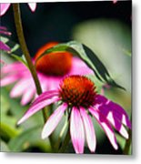 Purple Cones And Honey Bees Metal Print