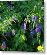 Purple Hanging Flowers Metal Print