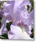 Purple Irises Artwork Lavender Iris Flowers 13 Botanical Floral Art Baslee Troutman Metal Print