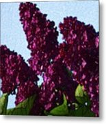 Purple Lilac 3 Metal Print
