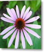 Purple Rays Metal Print