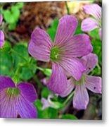 Purple Wildflowers Macro 3 Metal Print