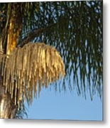 Queen Palm Tree Flower Metal Print